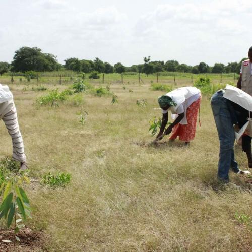 Au Mali, agir contre les effets du changement climatique